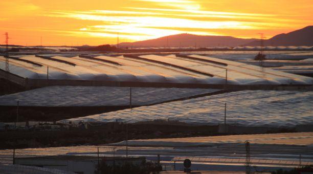 """COAG lamenta el """"desprecio"""" del comisario europeo de Agricultura al campo andaluz"""