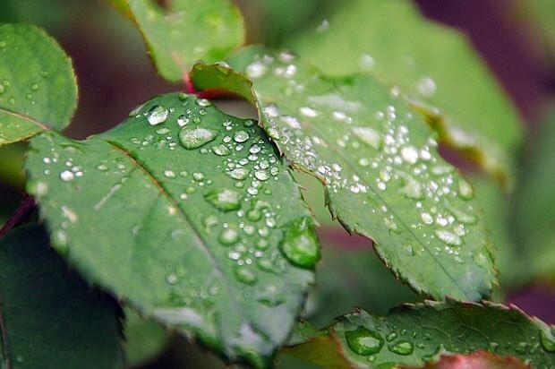 Un estudio desvela nuevos métodos para optimizar agua en los cultivos